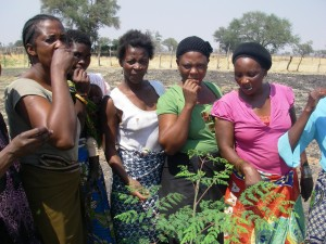 The Moringa orchard workers tasting their Moringa leaves.