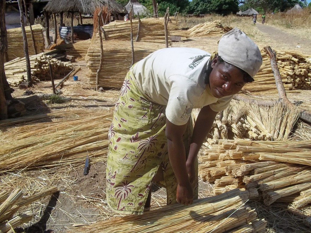 Women preparing thatch grass for school project 2 (2)