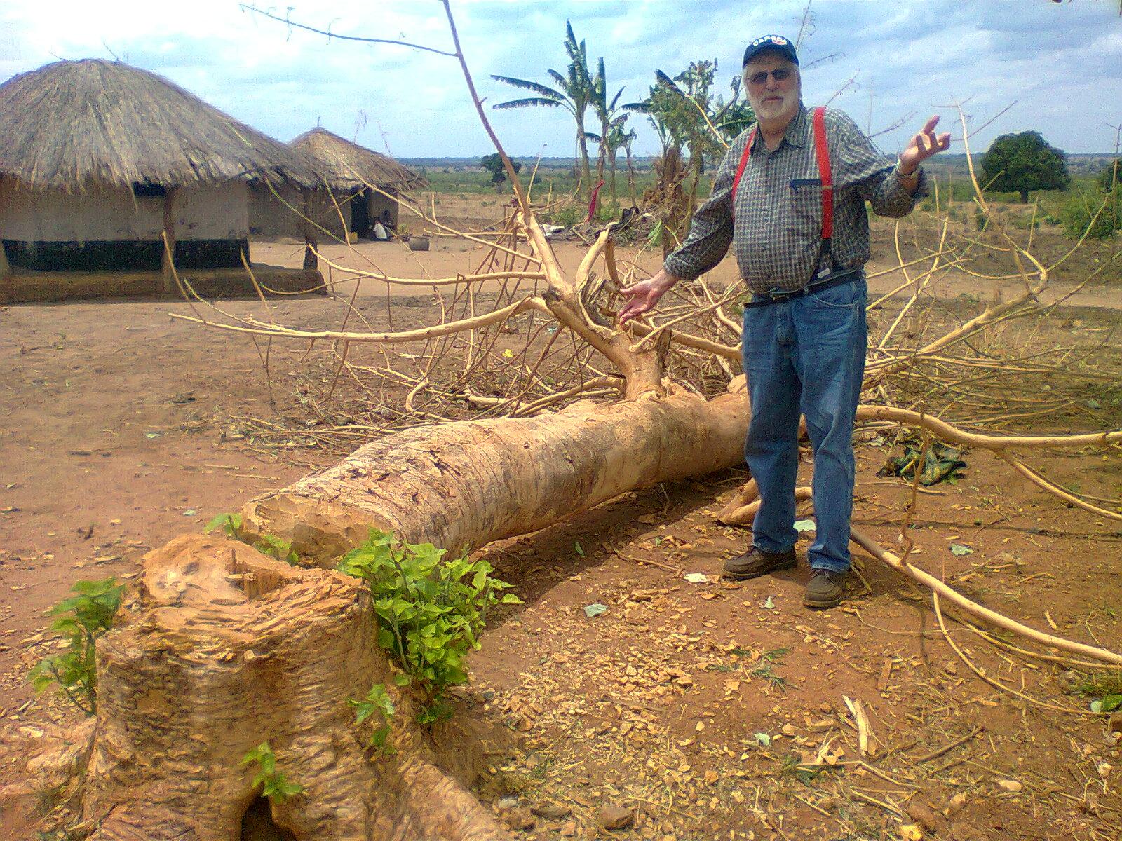 20151126 cut tree
