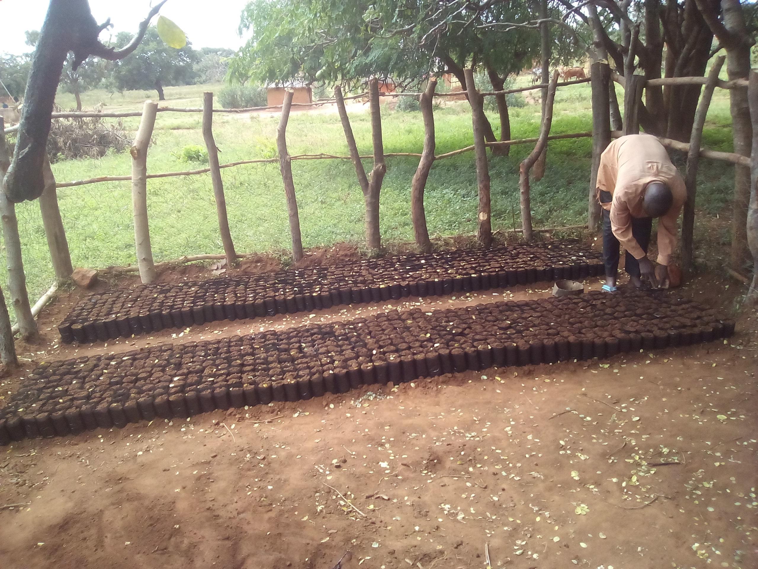 20170420 planting Mumbi nursery #1