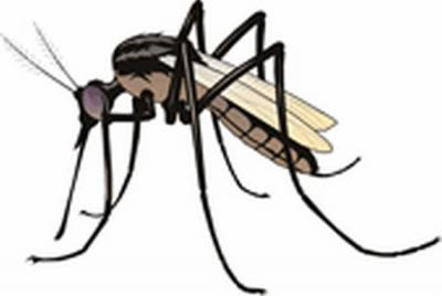 new-mosquito